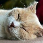 「耳栓」と「アイマスク」で睡眠の質は飛躍的に向上する